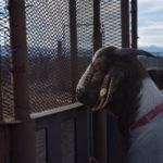 Therapy Animals – NFO Respite Center